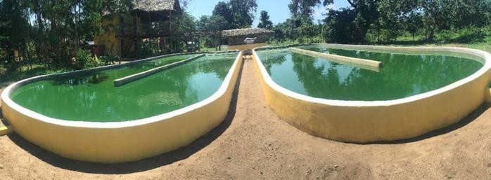 spirulina bassins Kenia