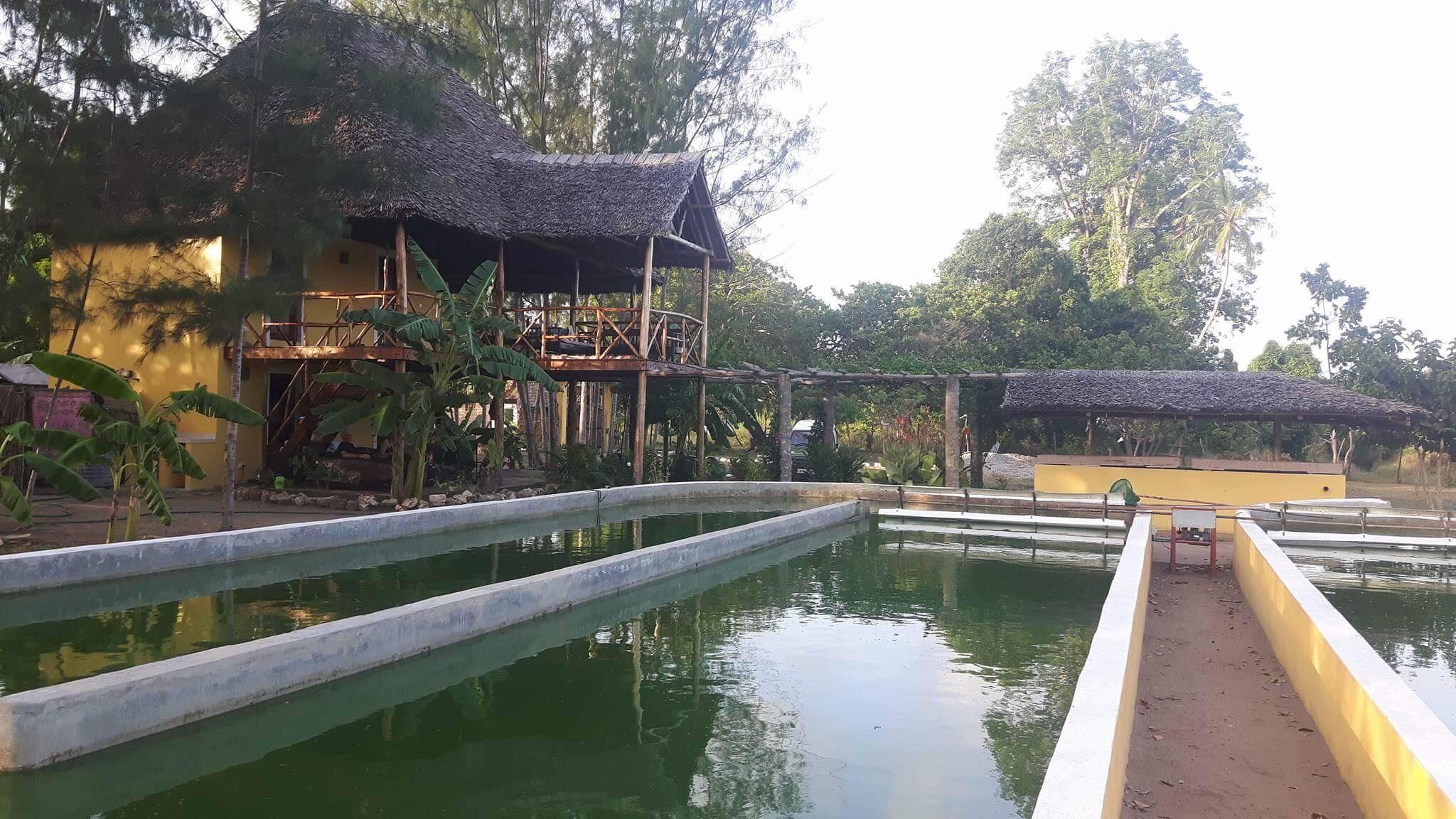 spirulina farm Kenia Muhaka