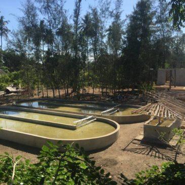 Spirulinakwekerij Kenia in bedrijf