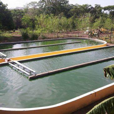 Project Muhaka Kenia maart 2017