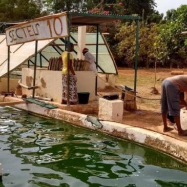 Burkina Faso: Overkapping van één van de spirulinabakken